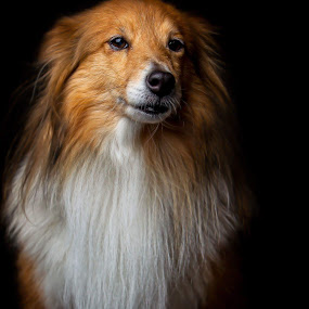 by Niclas Ådemark - Animals - Dogs Portraits
