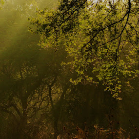 Bliss by Masud Pathan - Nature Up Close Trees & Bushes ( winter, park, jungle, fog, bushes, good, forest, bliss, morning, sun, rays )
