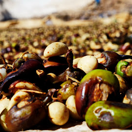 Coffe Harvest by Charles Saunders - Nature Up Close Other plants ( close up, harvest, dominican republic, coffee, best )