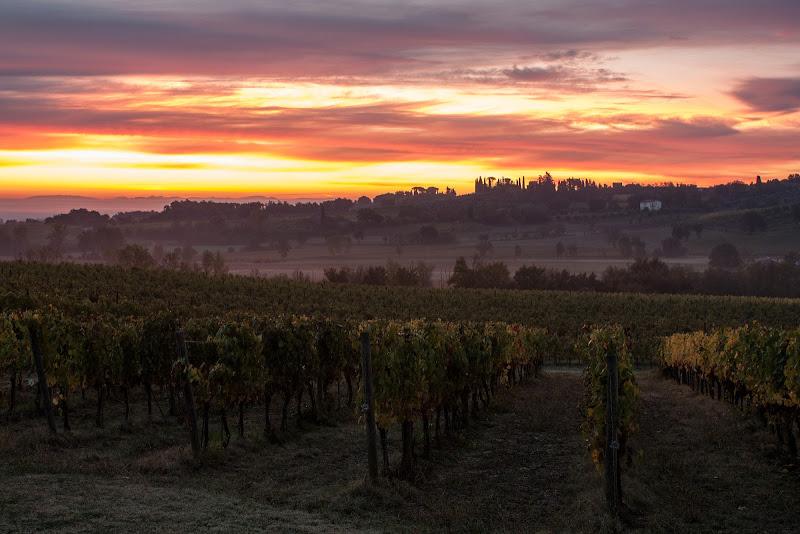 Alba tra le vigne di Simone Sartorelli