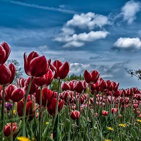 by Damir Ipavec - Nature Up Close Gardens & Produce