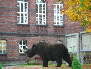 Photo: Tu mamuty jeszcze są :)