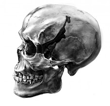 Photo: Ohalo II H2 skull, Illustrated in Photoshop