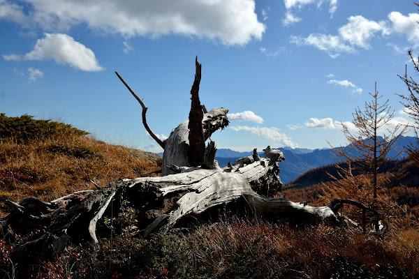 Una Pietà...legnosa. di gigidueelle