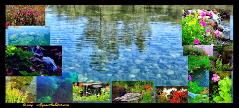 Photo: Imagine if you will...... This is your backyard. It is full of trout or your other favorite fish.  According to our clients it will change your life. This is what we do, ponds, lakes and streams.   _______________________________________________________ www.AquaHabitat.com    #swimming ponds #natural landscaping  #trout fishing ponds