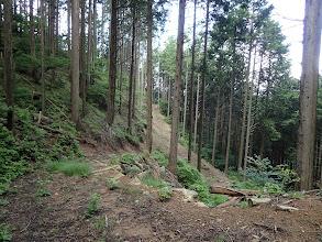 鞍部下まで林道が来ている