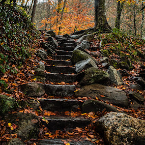 Walk in the Woods by Richard Michael Lingo - Landscapes Forests ( great smoky mountains, pathway, tennessee, forest, steps, woods,  )