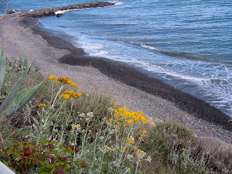 Fiori gialli sul mare di VeraWilma