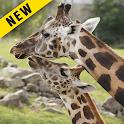 Wallpaper 4K : Giraffe HD icon