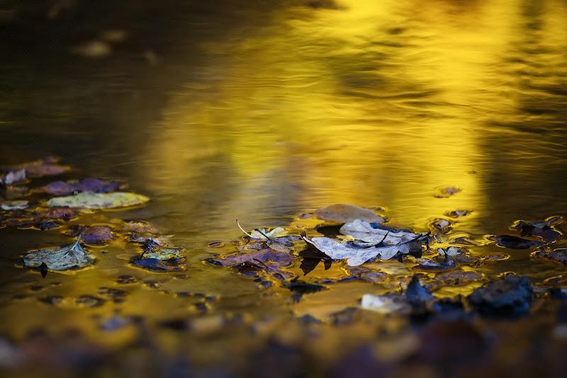 Oro liquido di Gloria Staffa