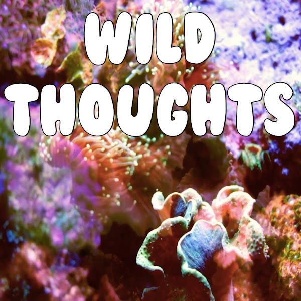 DJ KAHLED FEAT. RIHANNA & BRYS WILD THOUGHTS