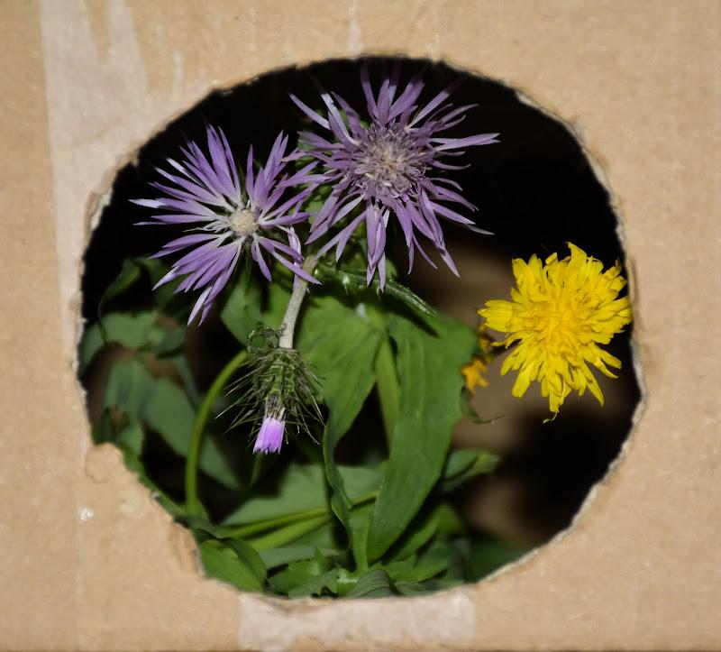 Scatola con fiori di Iky
