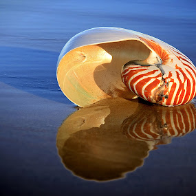 Beached by Ann Van Breemen - Artistic Objects Still Life ( water, pwcstilllife-dq, sand, shell, queensland, reflection, surfers paradise, australia, beach )
