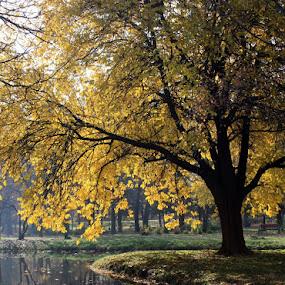 Autumn in Skopje city park  by Emil Chuchkov - Landscapes Weather ( cuckove canon )