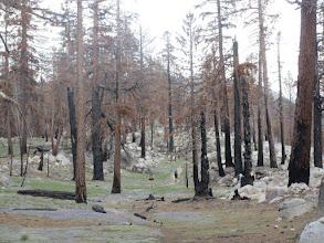 Photo: Recent fire