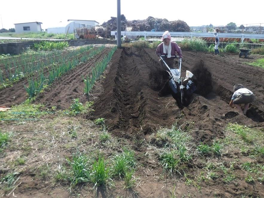 管理機リターンカルチの耕耘爪を里芋用に付け替え、サク切りします。とび上がる土を浴びるのが大好きなこどもたち。