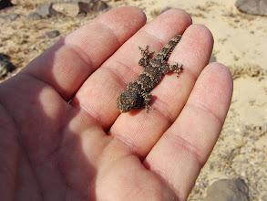 Photo: Gecko