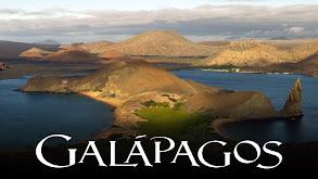 Galapagos thumbnail