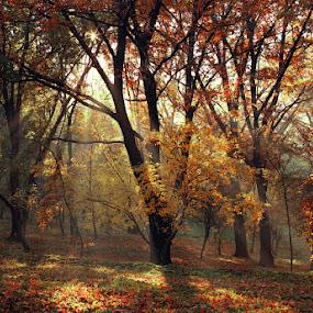 by Alexandru Popovski - Landscapes Forests