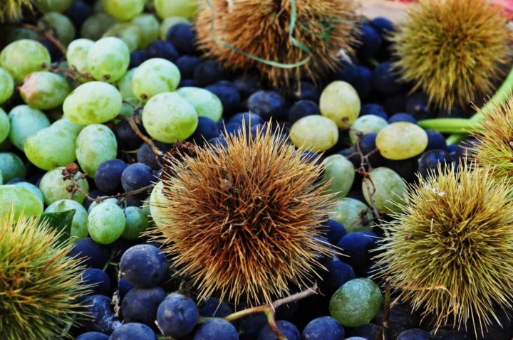 Frutta di stagione di lana