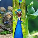 گیاهان، حیوانات، آکواریوم icon
