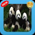 Nuevo Panda WP icon