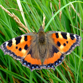 by Russell Mander - Nature Up Close Other Natural Objects ( orange, butterfly, black, flowery meadows, colourful )