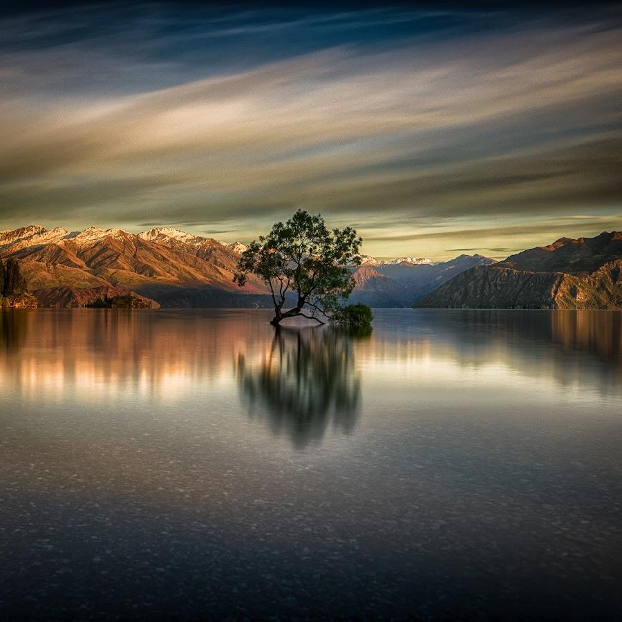 Wanaka Tree by Alan Wright - Landscapes Waterscapes ( water, mountains, mountain, tree, waterscape, nz, nikon, ooak )