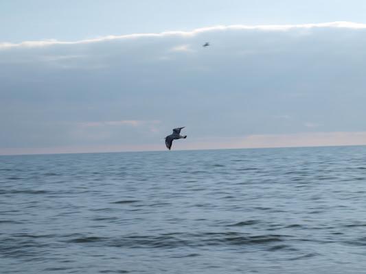 Il gabbiano e il mare di Ilaria Torregiani