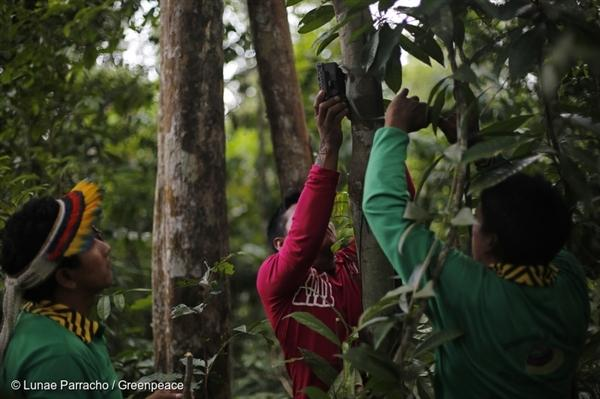 Ka'apor Indians setting up trap cameras in areas used by illegal loggers to invade the indigenous territory.