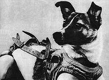 Laika (Soviet dog).jpg