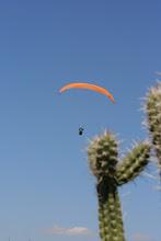 Photo: He'd better watch where he lands!