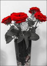 """Photo: Trandafir ( Rosa) - fotografie prelucrata in rosu negru - de la florarese (Alee Mr.2) primiti """"de suflet"""" de la Bunicutu -  2017.08.15"""