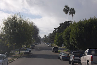 Photo: Steven's street ... Steven's 2 palm trees
