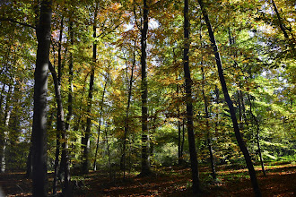 Photo: St Germain forest - in the deep of woods
