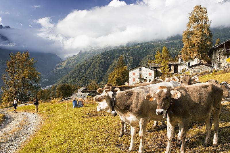 Care mucche, si torna a casa di Roberto Simonazzi