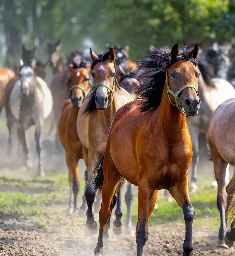 by Stanley P. - Animals Horses