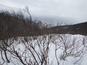 雪が少なく音波山の山頂も藪