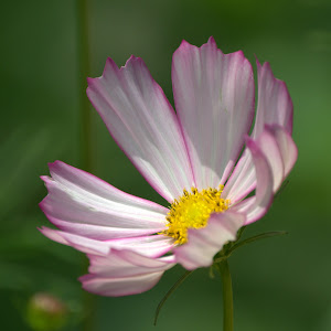 nikon 7-17-18 flower wk 39.jpg