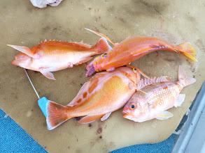 Photo: ・・・真鯛がいない。 アカイサキ3匹とタマガシラ。