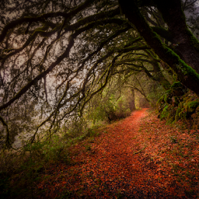 Life's Path by Paul Judy - Landscapes Forests ( saratoga gap, sunset, trail, trees, forest, santa cruz mountains, hiking )