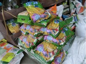 ほとんどが中国から輸入されているDY28という品種である。ネパールのハイブリット品種が3種存在する