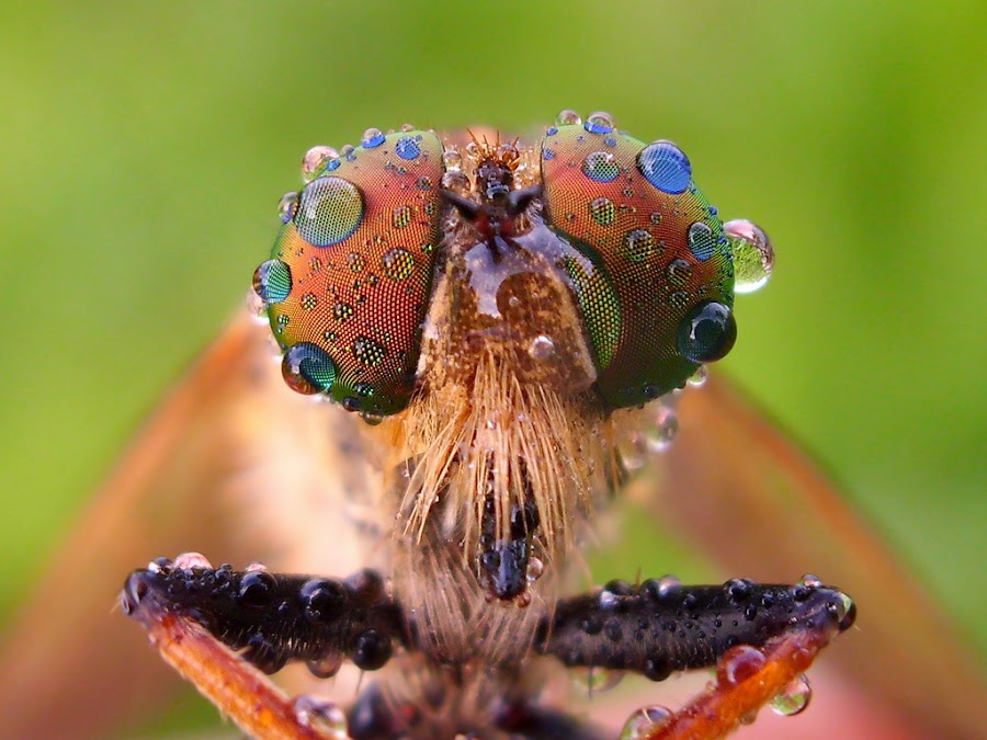 Only Pocket Shot by Iwan Ramawan - Animals Insects & Spiders