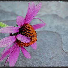 by Maithili Saoji - Nature Up Close Flowers - 2011-2013