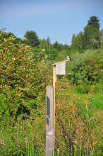 Photo: Plenty of birds and signs that speak of birds and signs of birds