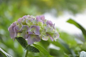 Photo: 数多くの花たちを楽しむことができるし、(2014,05,25)