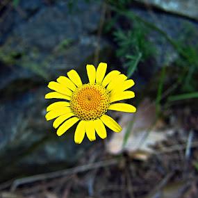 by Mehmet  Erkan Duran - Nature Up Close Flowers - 2011-2013
