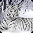 White Tiger HD Live Wallpaper apk