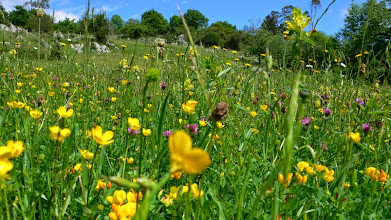 Photo: April; our wild flower meadows start to look spectacular