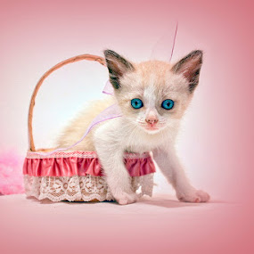 PInk by Nallely Martinez - Animals - Cats Kittens ( cat, pink bow, baby, young, animal )